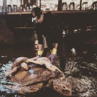 Mořské želvy v Českých.Budějovicích?