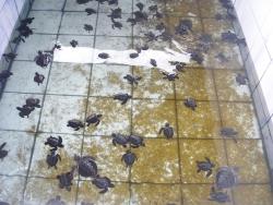 Želvy v bazénech